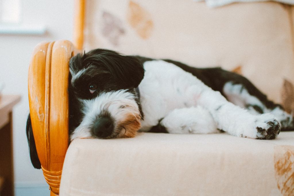 Match Your Upholstery to Your Pet